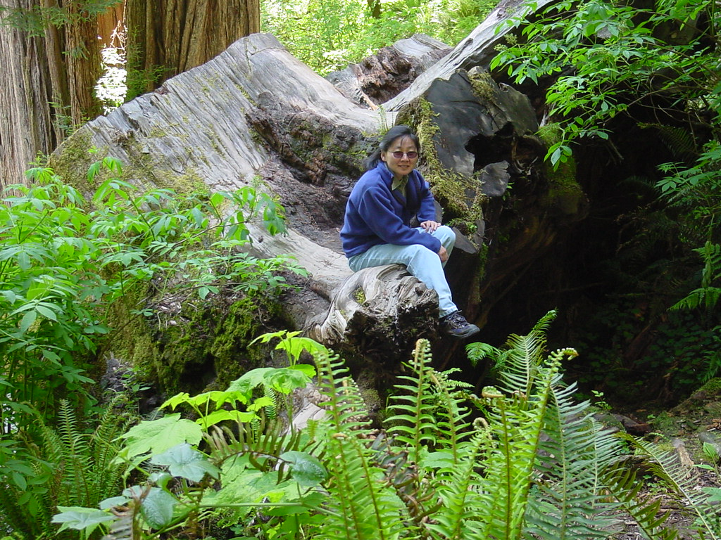 at Redwood National Park, California
